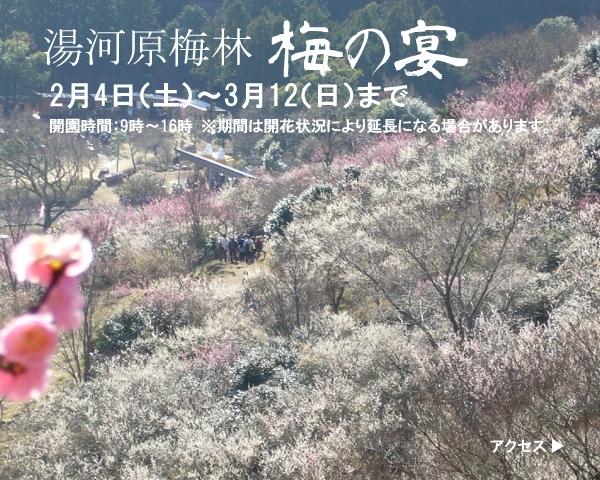 2017梅の宴